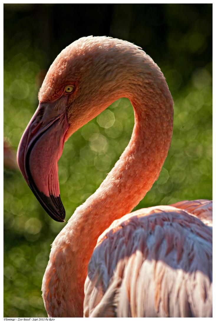 Flamingo by Reto