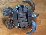 Unpainted Metal Sea Turtle 6 by Ronnie-R15