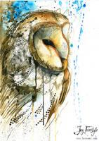 Owl by JayFreestyle