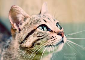 Huanitta by PhotoBySavannah