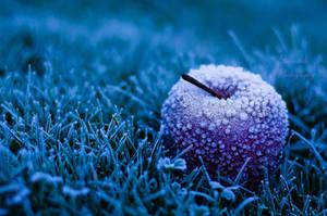Forbidden fruit by PhotoBySavannah