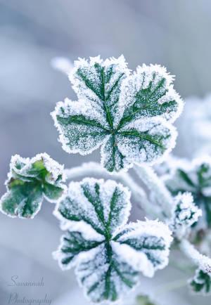 Freeze by PhotoBySavannah
