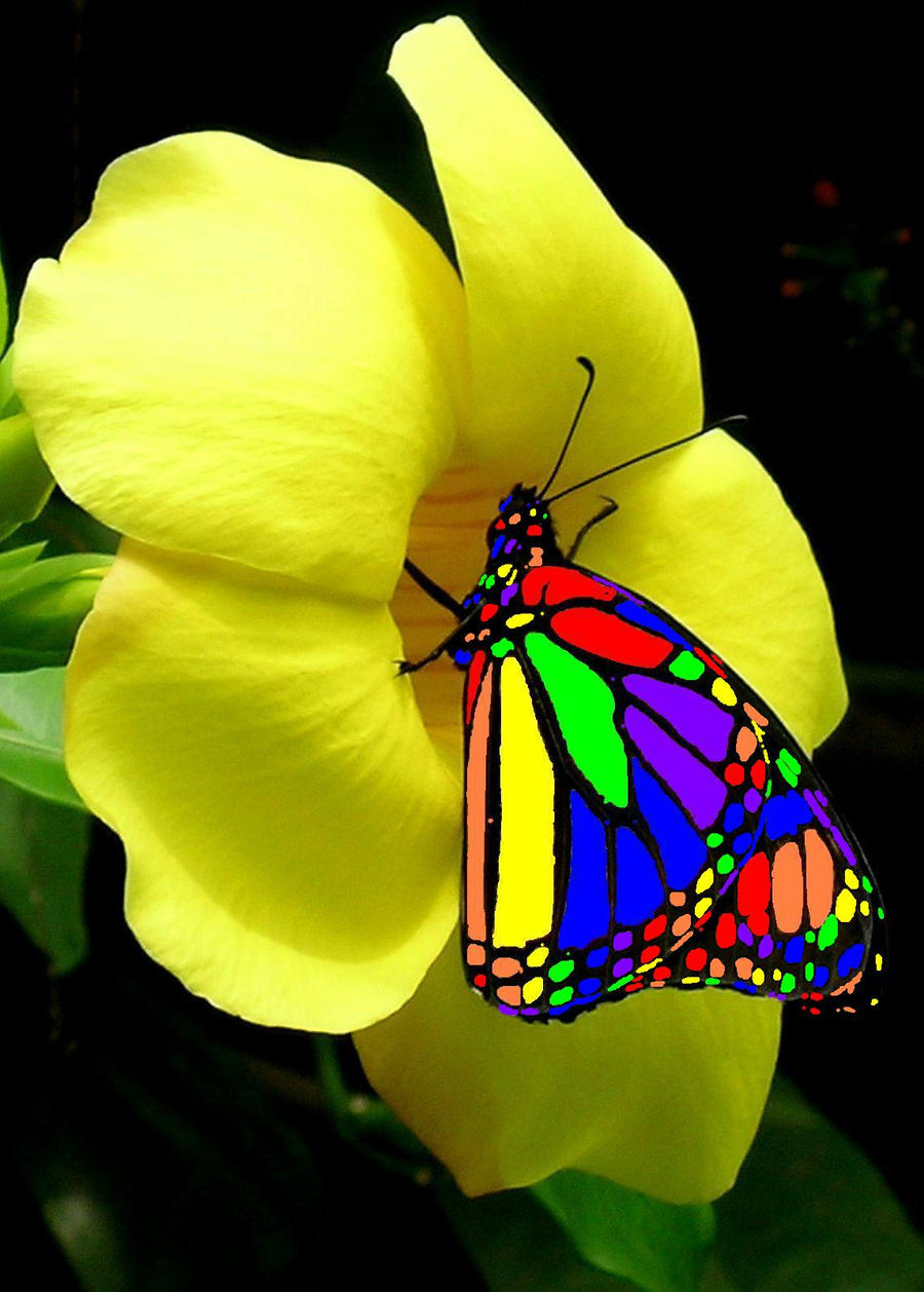 Rainbow butterfly by madappy on deviantart for Butterfly on flowers