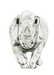 Dangerous Rhinoceros