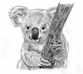 High Koalaty