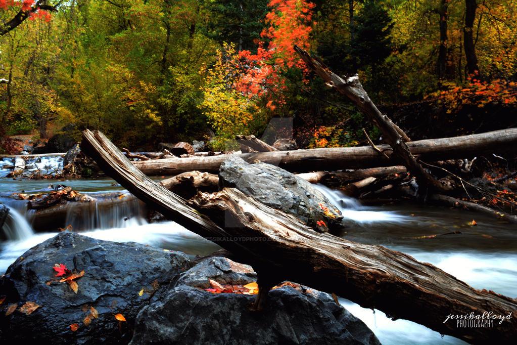 Canyon Beauty by jessikalloydphoto