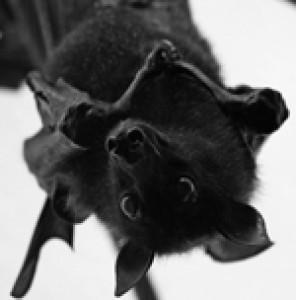 blackbat89's Profile Picture