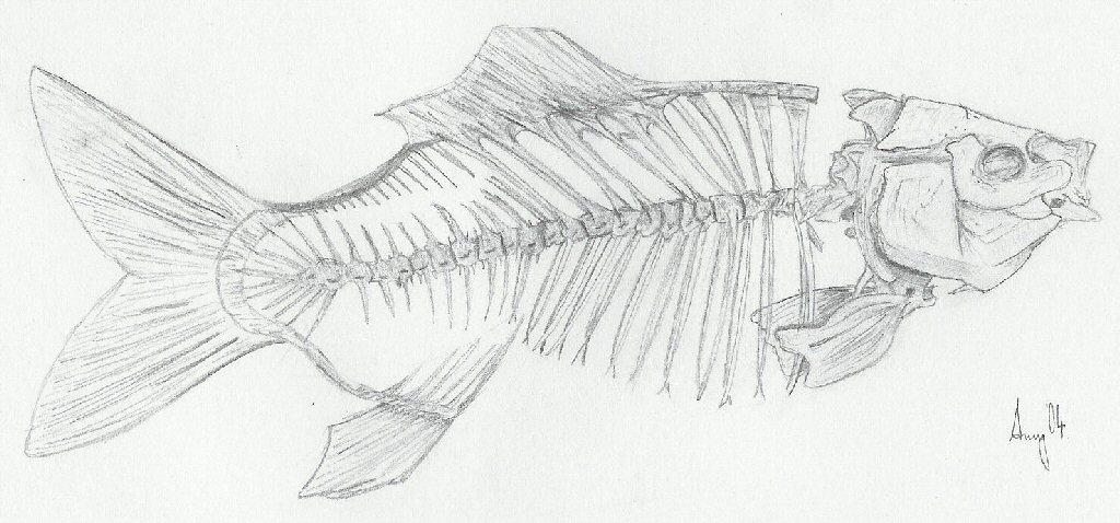 how to make a fish skeleton