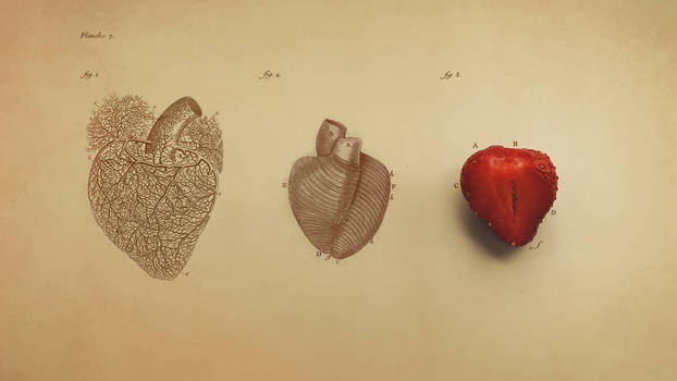 Anatomy of Heart