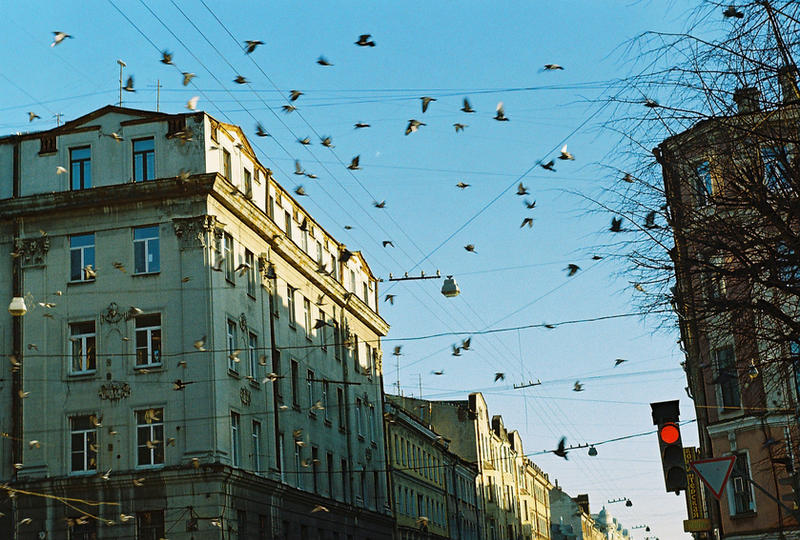 The Birds by euriphesdream