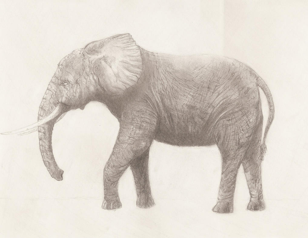 Elephant Drawing Images Elephant Drawing Tumblr