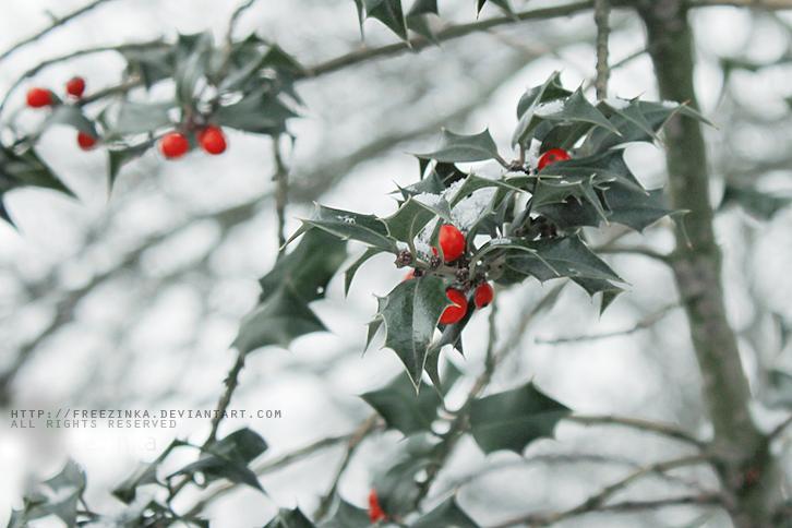 Holly by freezinka