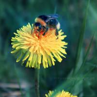 .bumble-bee by freezinka