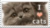 Stamp: I love cats by jelloween