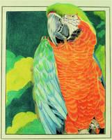 A Pretty Parrot by professorwagstaff