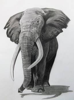 Elephant in Pencil