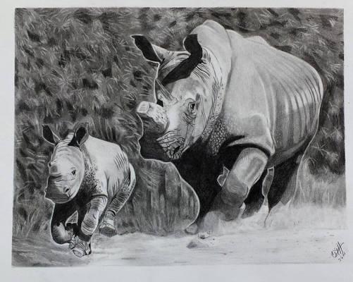 Rhino with rhino calf in pencil