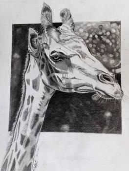 Giraffe in graphite