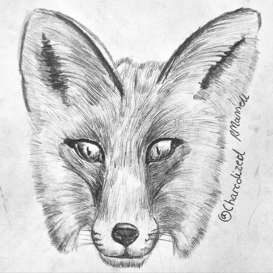 Fox by charcolized