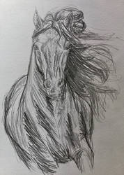 Messy Horse Sketch