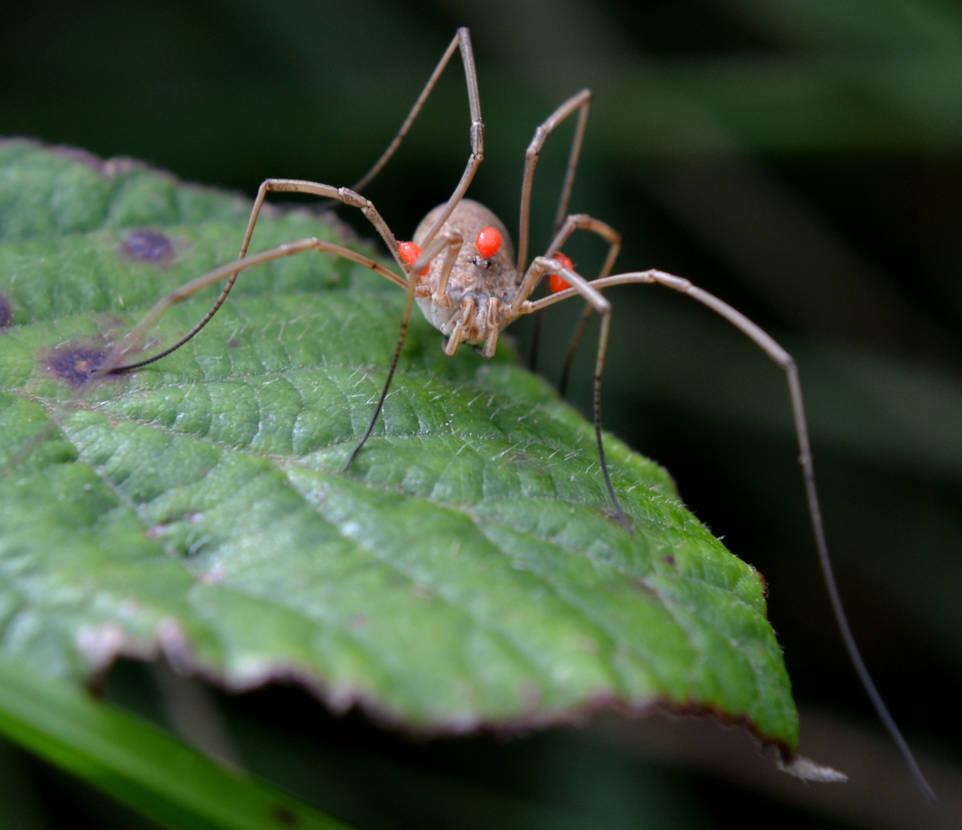 Wierd Spider 1