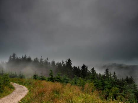 Misty Woodland 5