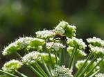A bug on a flower 2