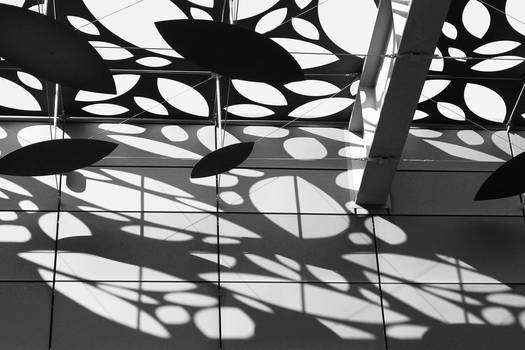 Lace Shadows