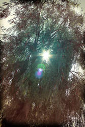 Eye of the Green Heart