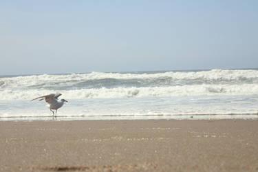 Shoreline Visitor