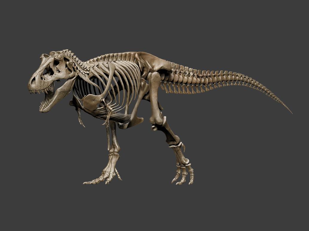 Tyrannosaurus rex skeleton - anatomy study by hugocafasso on DeviantArt