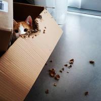 Hiding Box