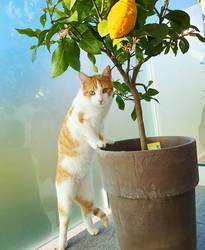 Phelps at the Lemon tree