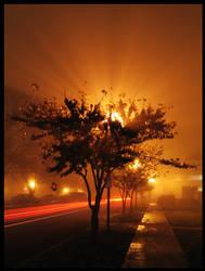 Tree Light by spywacko