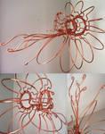 Nautilus Nautilidae