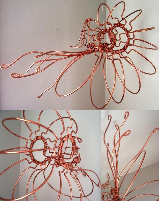 Nautilus Nautilidae by JPCopper