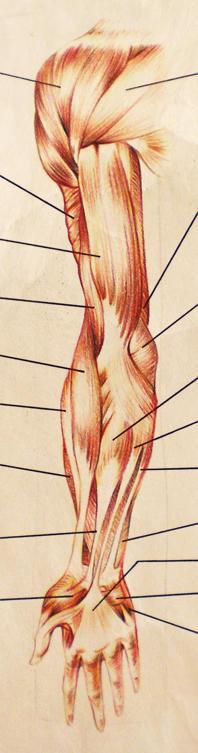 A09 - Anatomy - 2