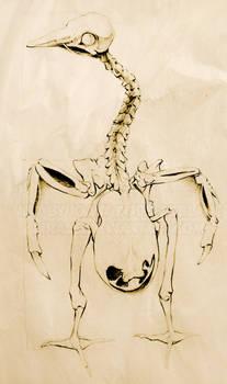 A09 - Anatomy - 5