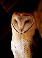 Owl by Elu210