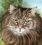 Cat - close up