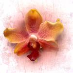 A flower for Tam