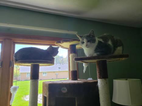Sheba and Loki On a Tree