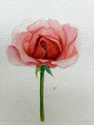 Pink rose by sk8ternoz