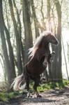 The Unicorn IV