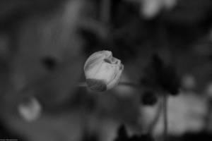 Flower by hellnicki