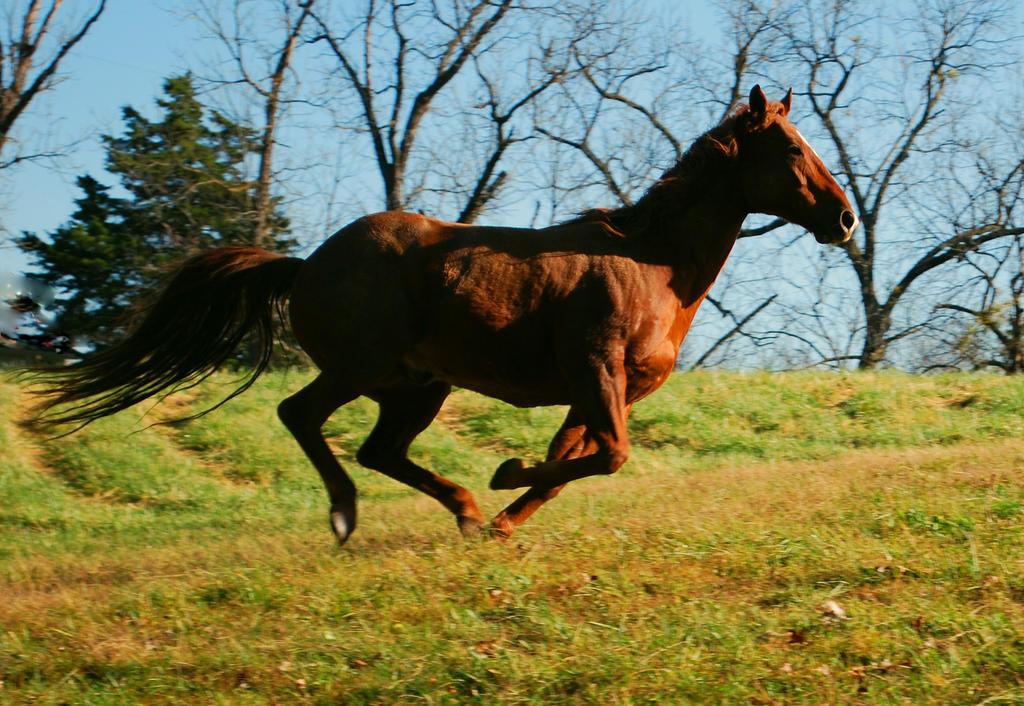 Running Wild and Free