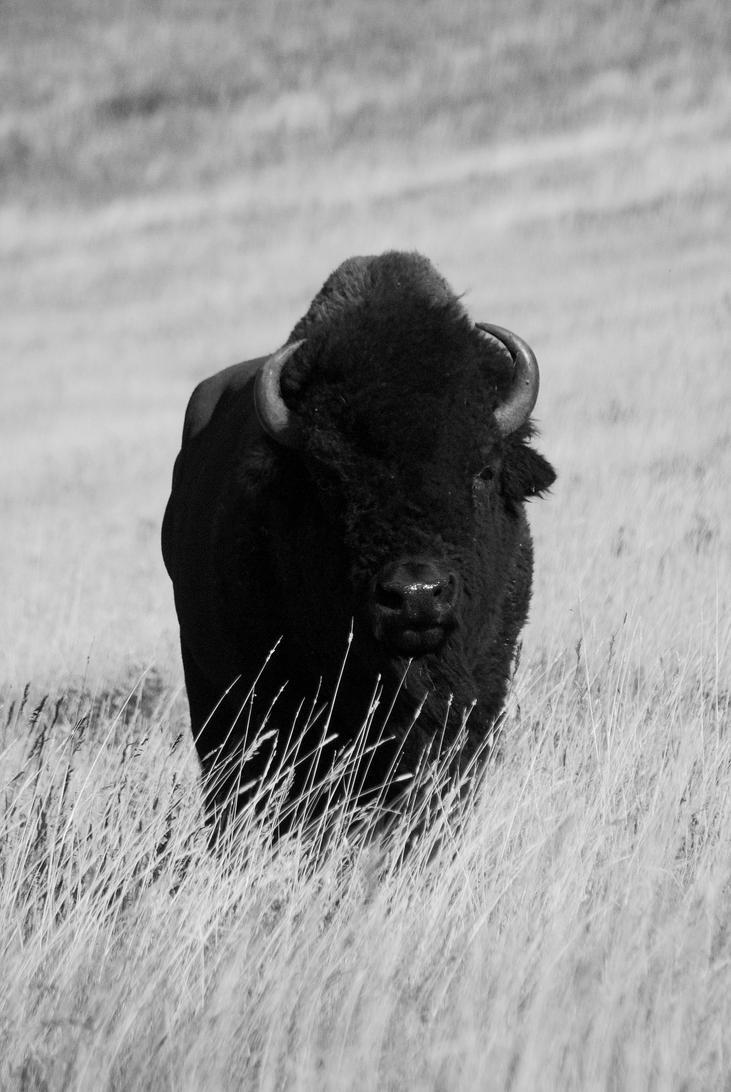 King of the Prairie by JeweledFaith