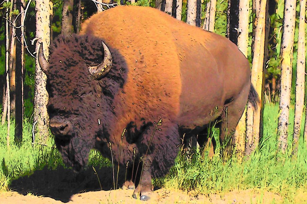 Buffalo from Yellowstone by JeweledFaith