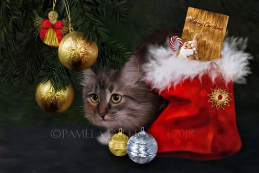 Christmas - Cat
