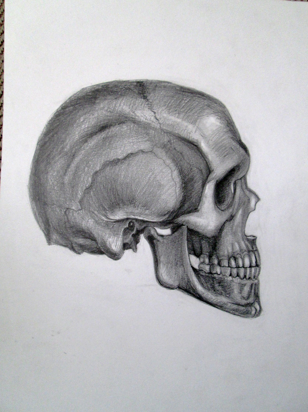 It is a photo of Accomplished Skull Profile Drawing